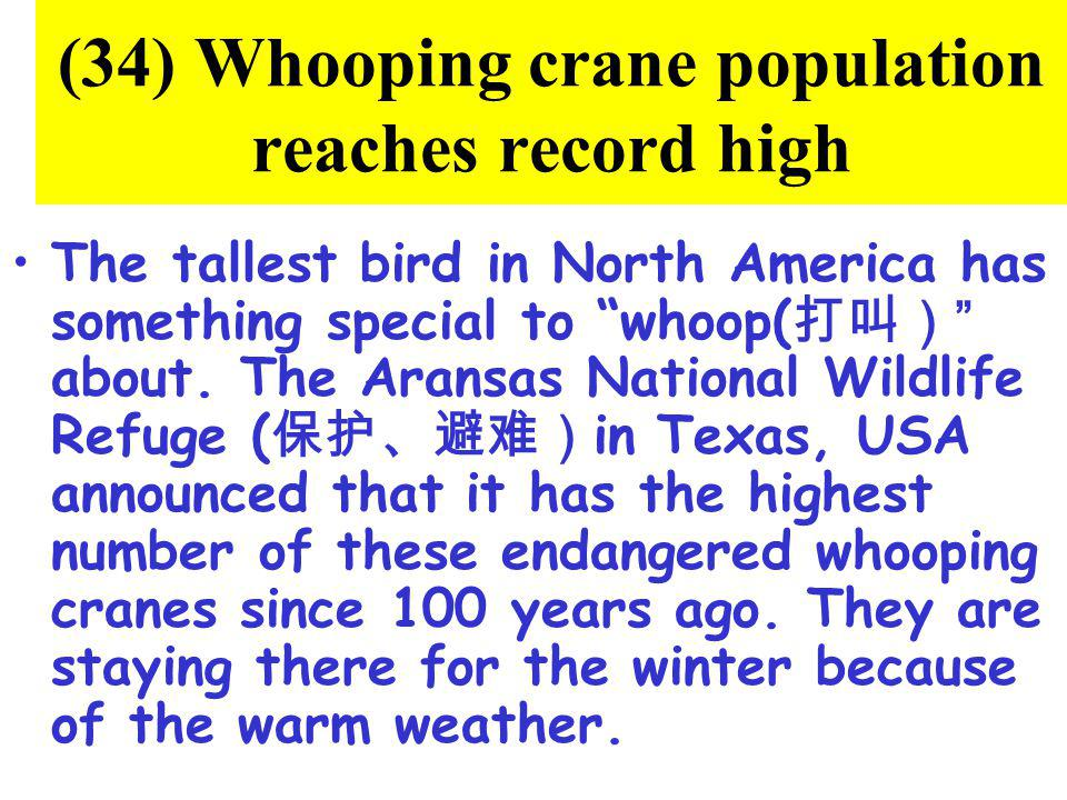 (34) Whooping crane population reaches record high