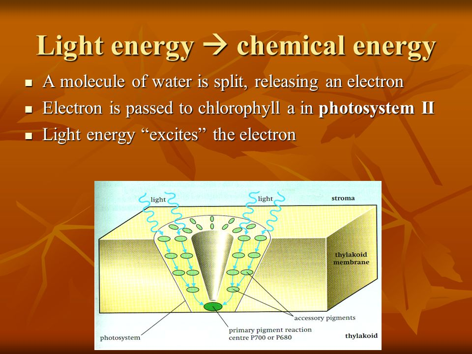 Light energy  chemical energy