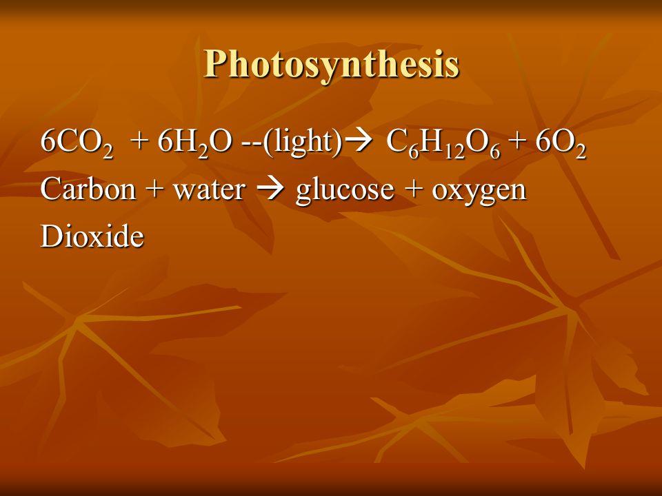 Photosynthesis 6CO2 + 6H2O --(light) C6H12O6 + 6O2