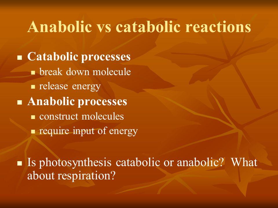 Anabolic vs catabolic reactions