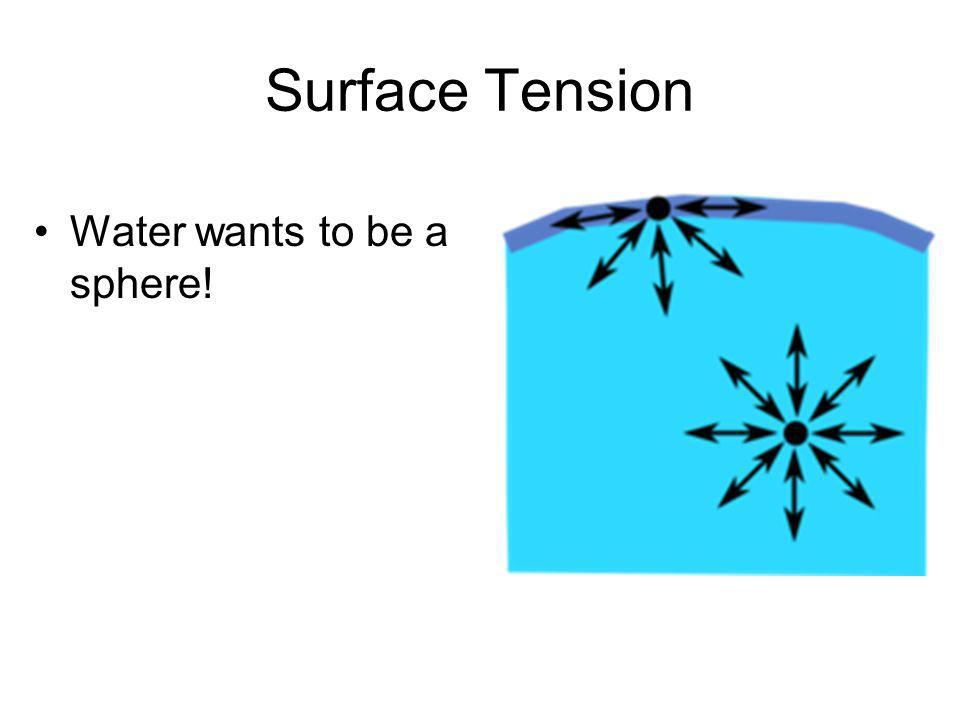 Surface Tension Water wants to be a sphere!