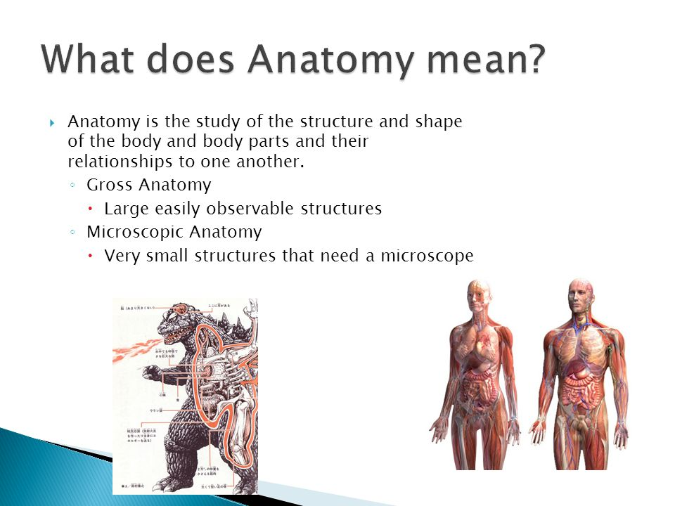 What does Anatomy mean Anatomy is the study of the structure and shape of the body and body parts and their relationships to one another.