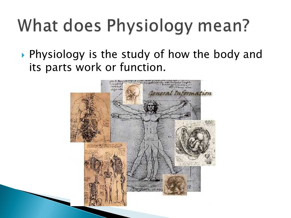 What does Physiology mean