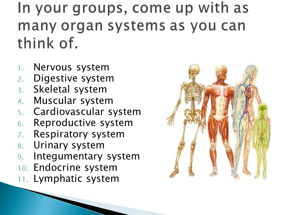 In your groups, come up with as many organ systems as you can think of.