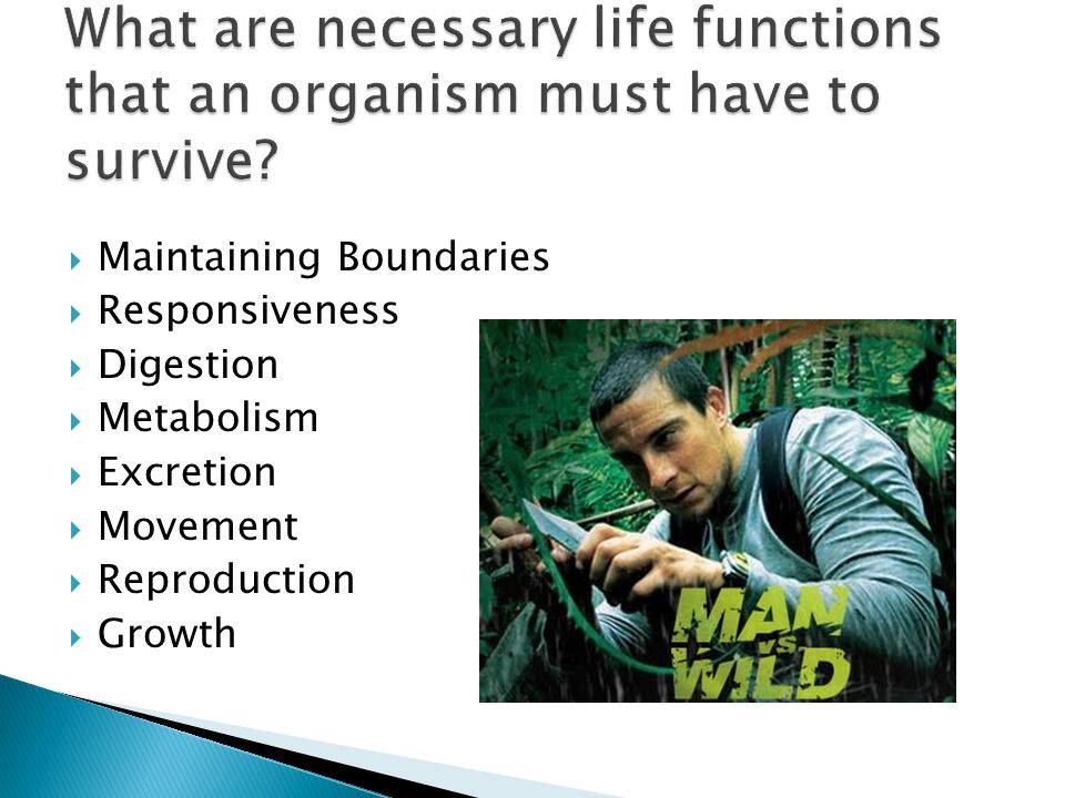 What are necessary life functions that an organism must have to survive