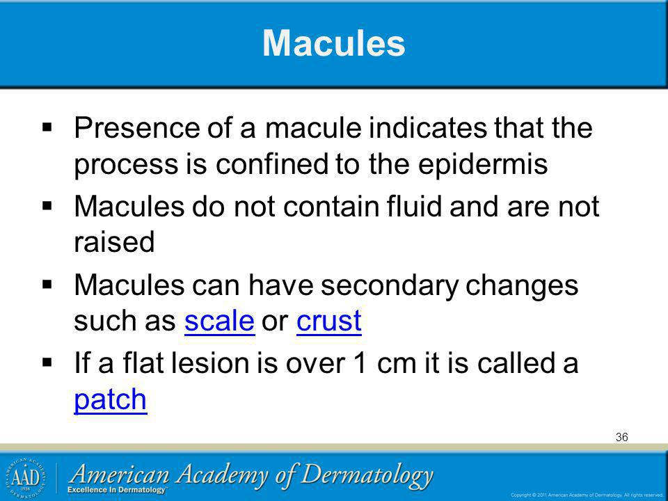 Macules Presence of a macule indicates that the process is confined to the epidermis. Macules do not contain fluid and are not raised.