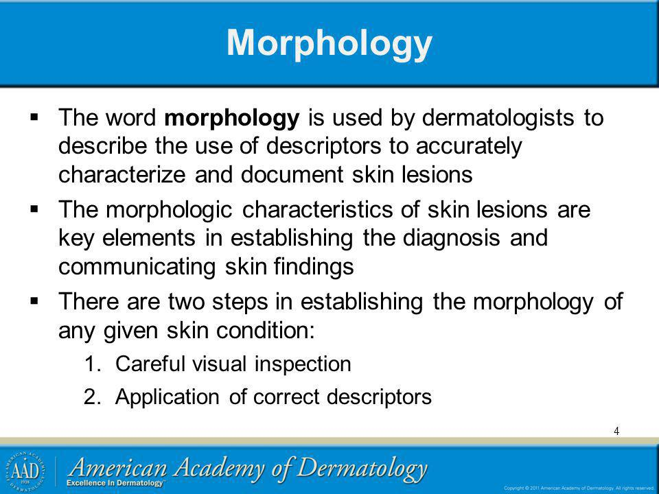 Morphology The word morphology is used by dermatologists to describe the use of descriptors to accurately characterize and document skin lesions.