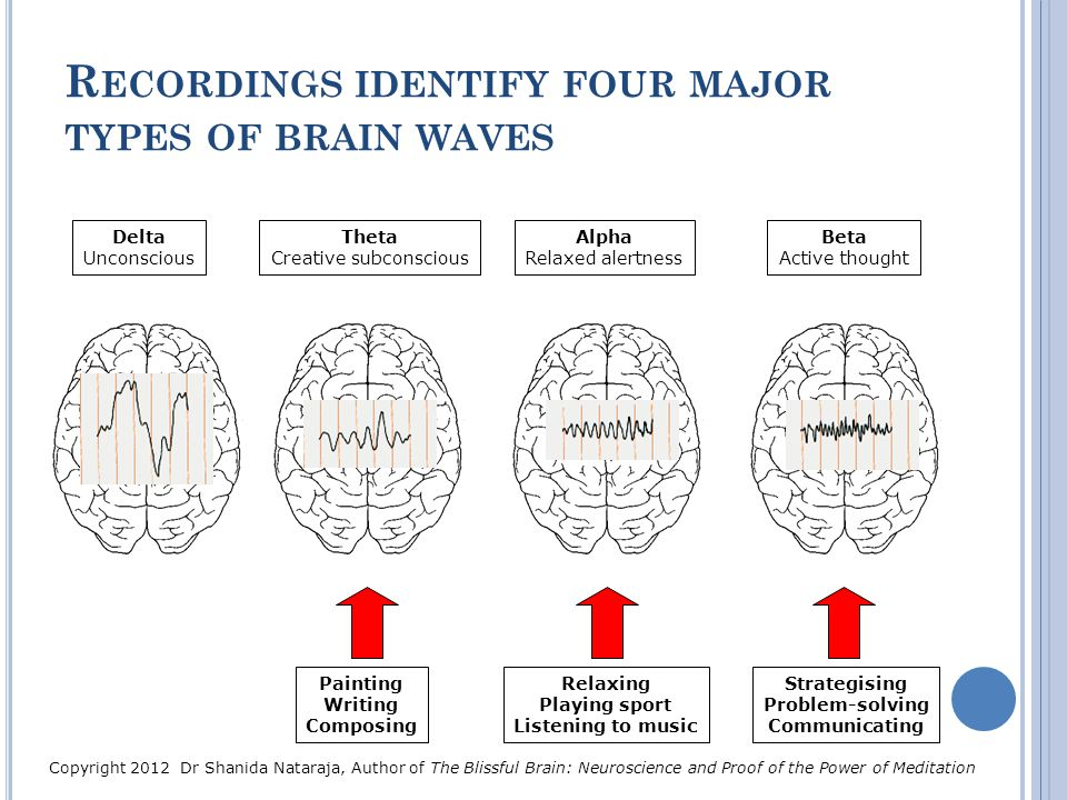 Recordings identify four major types of brain waves
