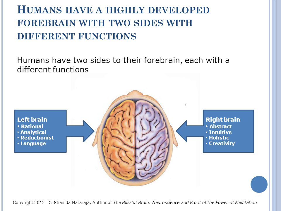 Humans have a highly developed forebrain with two sides with different functions