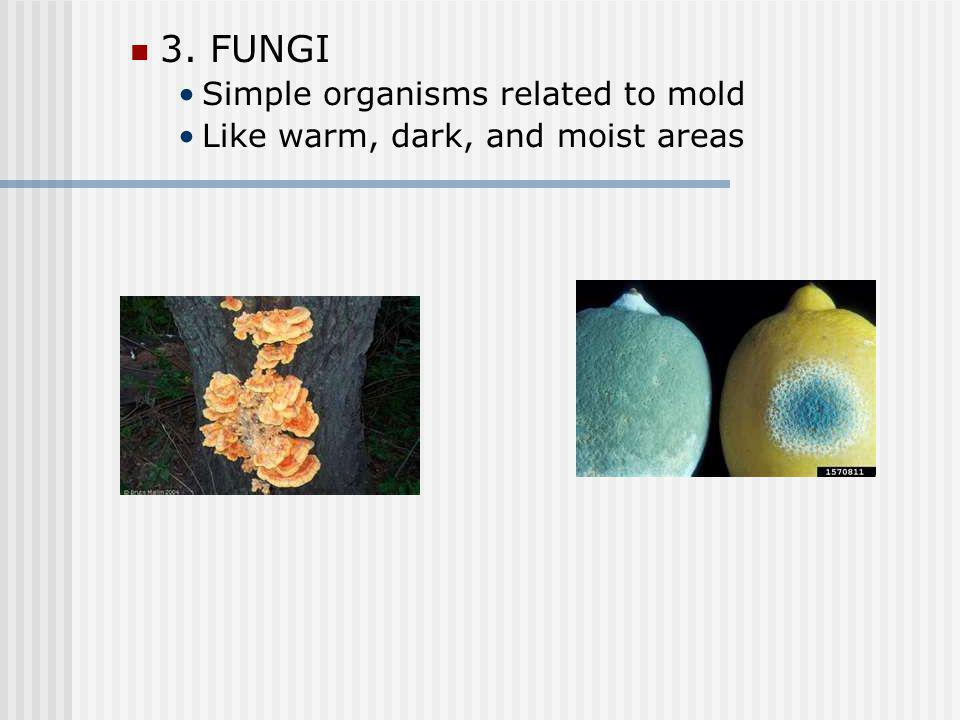 3. FUNGI Simple organisms related to mold