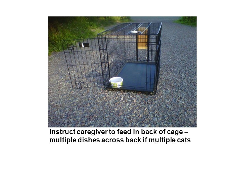 Instruct caregiver to feed in back of cage – multiple dishes across back if multiple cats
