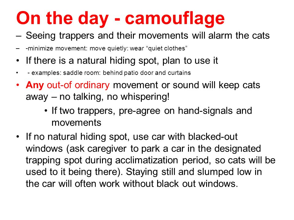 On the day - camouflage Seeing trappers and their movements will alarm the cats. -minimize movement: move quietly: wear quiet clothes