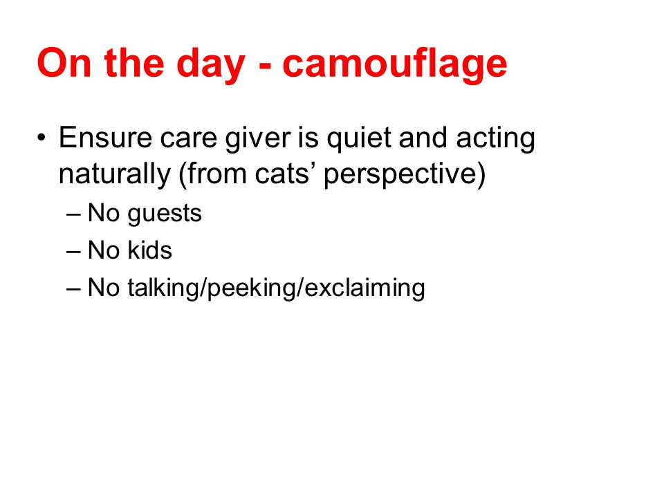 On the day - camouflage Ensure care giver is quiet and acting naturally (from cats' perspective) No guests.