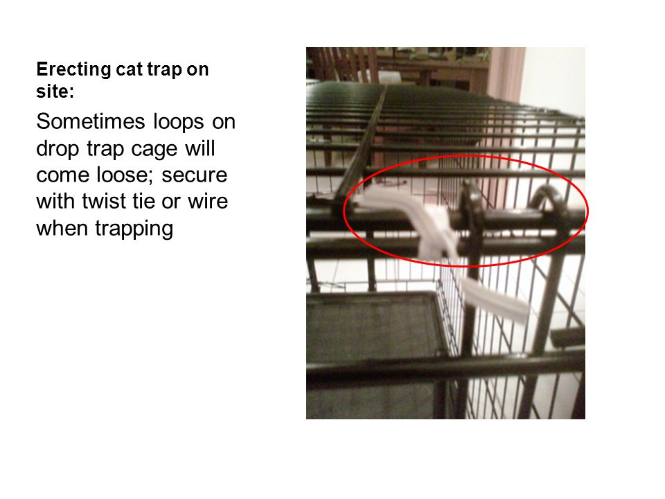 Erecting cat trap on site: