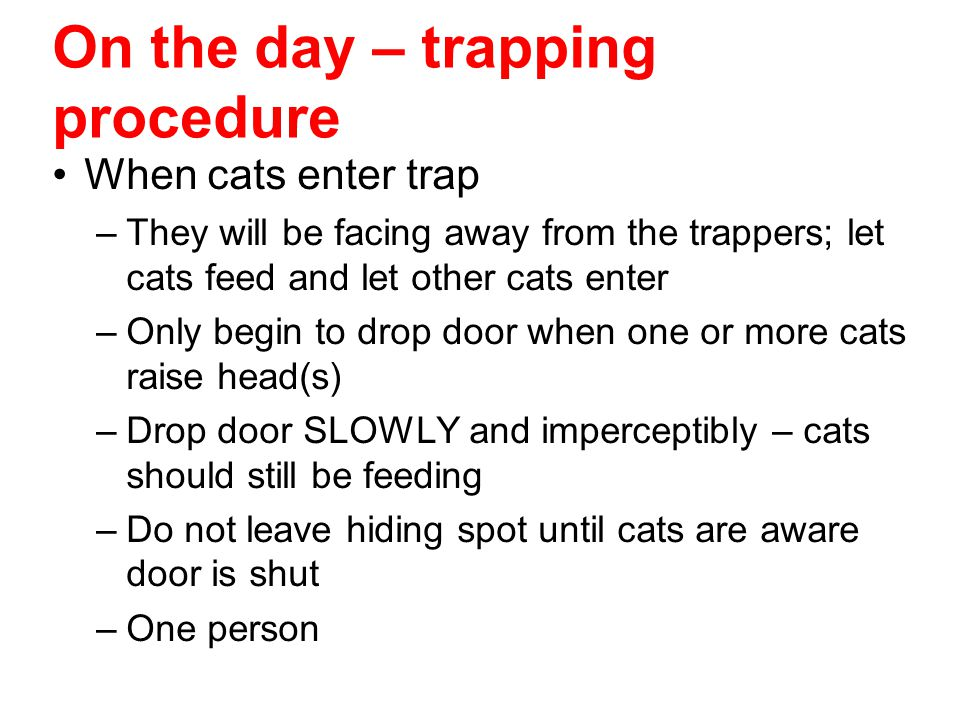 On the day – trapping procedure