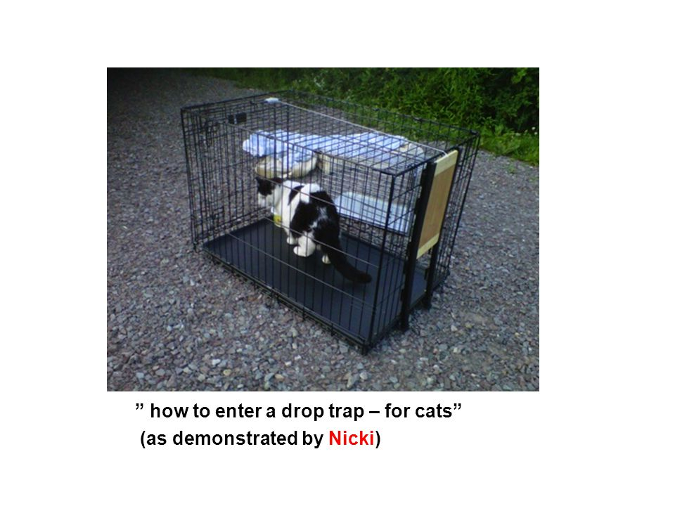 how to enter a drop trap – for cats