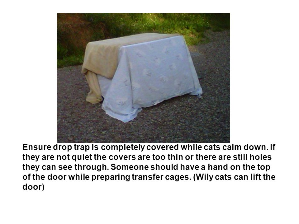 Ensure drop trap is completely covered while cats calm down