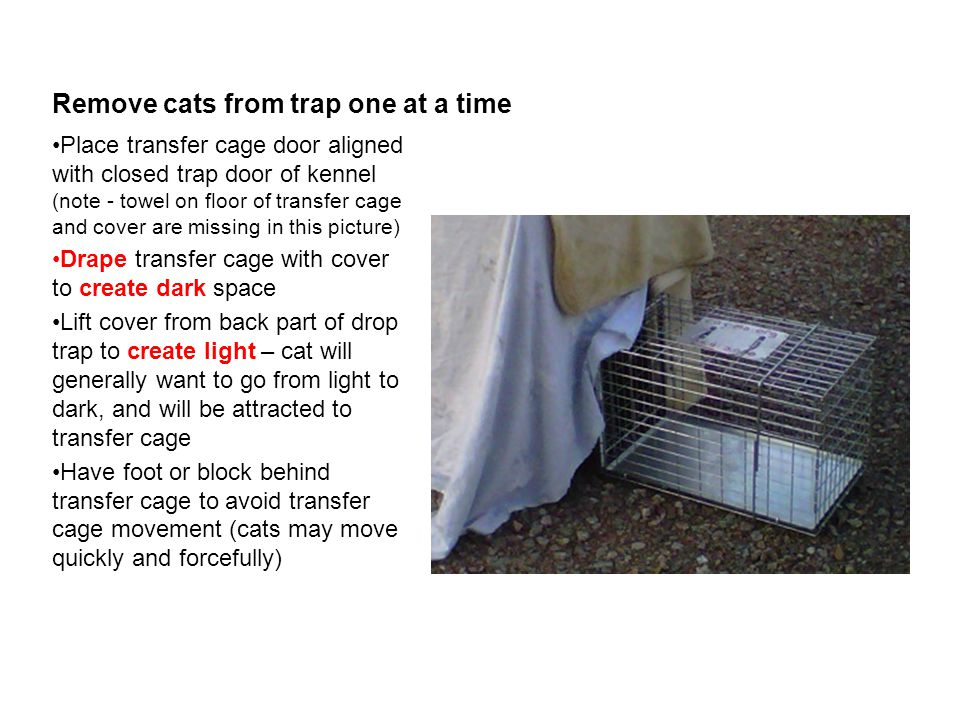 Remove cats from trap one at a time