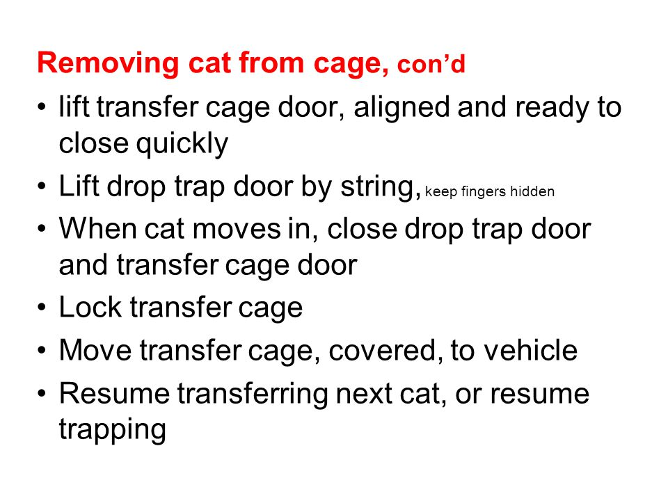Removing cat from cage, con'd