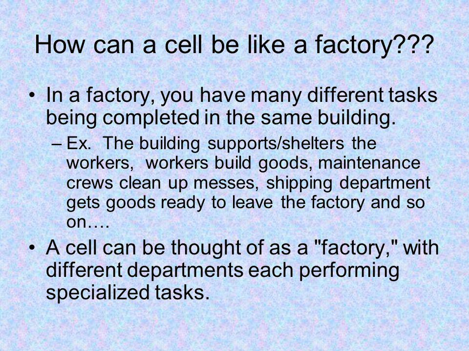 How can a cell be like a factory