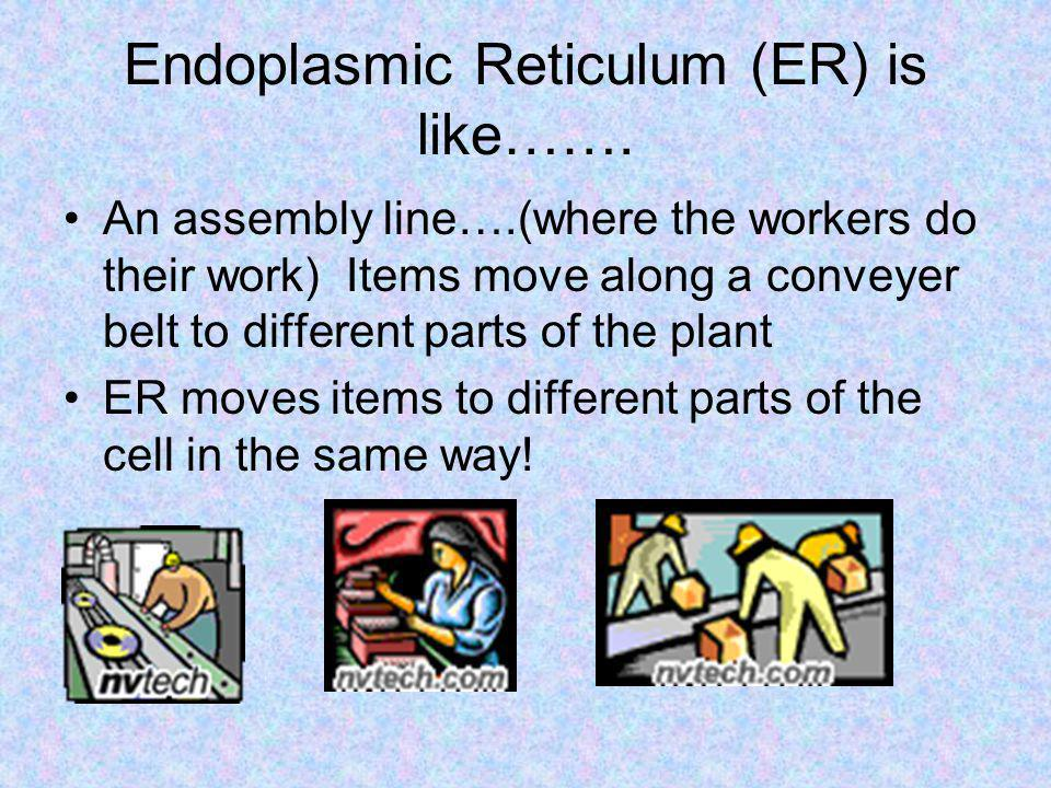 Endoplasmic Reticulum (ER) is like…….