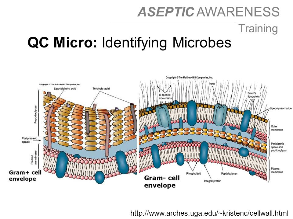 QC Micro: Identifying Microbes