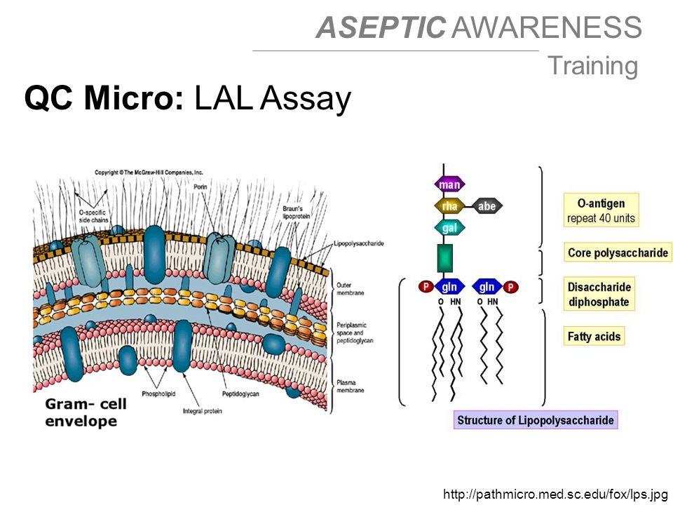 QC Micro: LAL Assay http://pathmicro.med.sc.edu/fox/lps.jpg