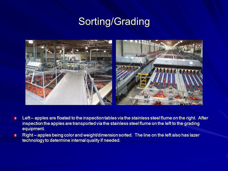 Sorting/Grading