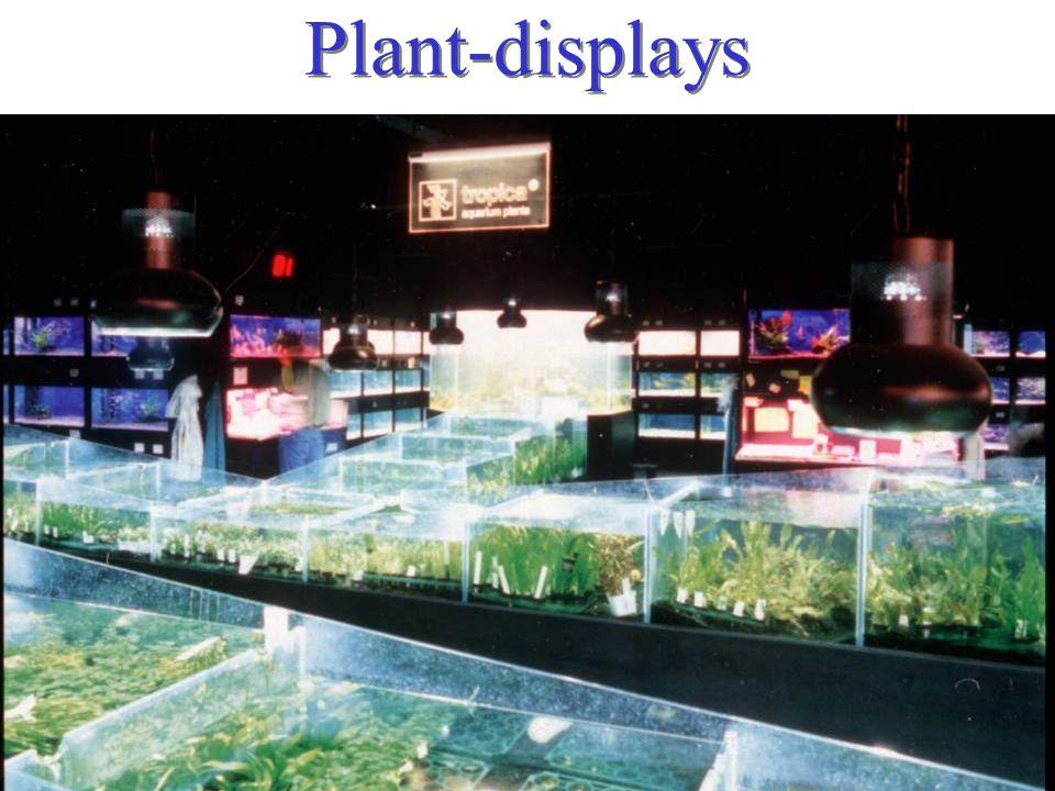 Plant-displays