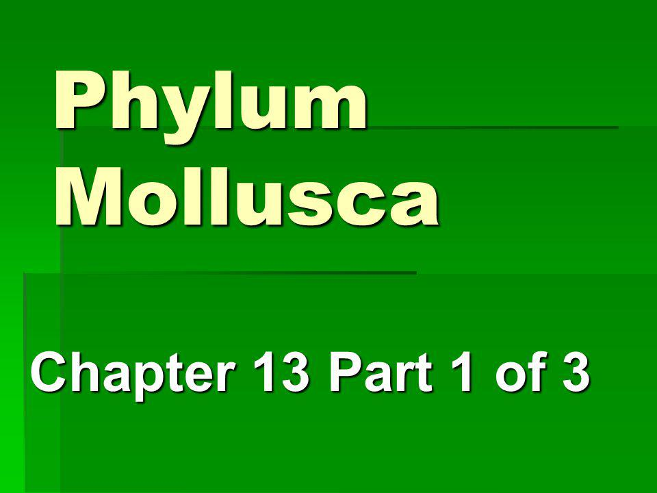 Phylum Mollusca Chapter 13 Part 1 of 3