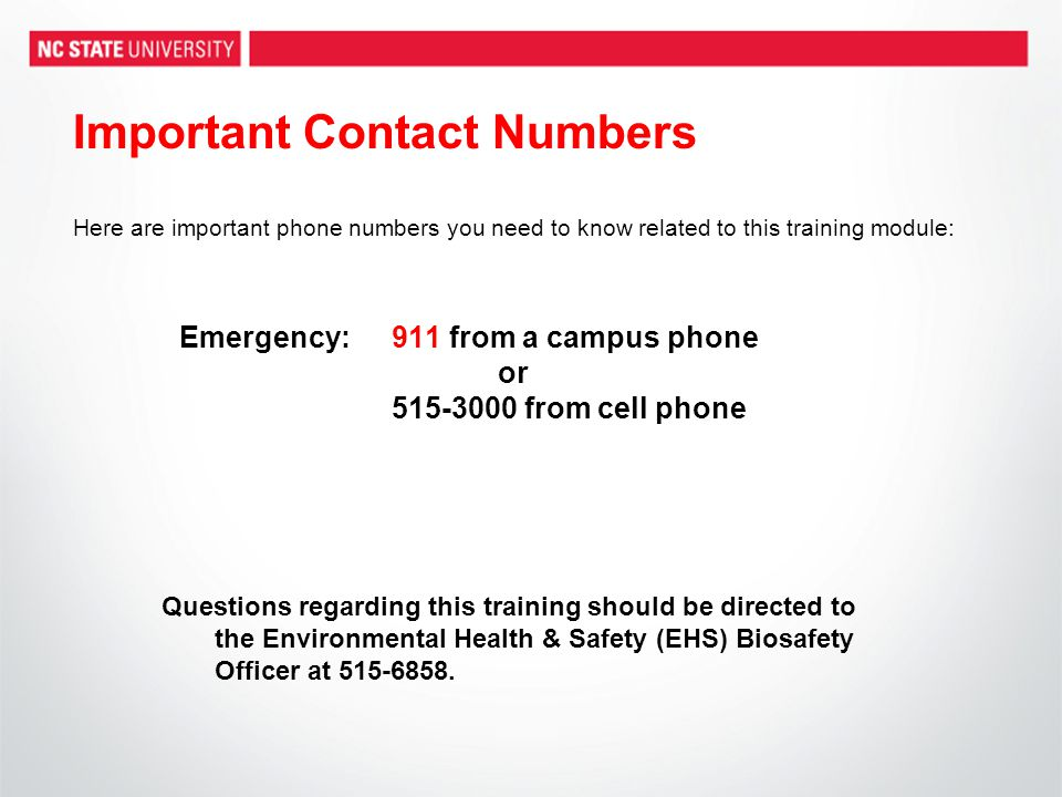 Important Contact Numbers