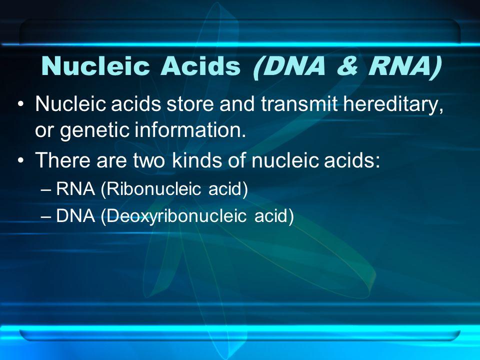 Nucleic Acids (DNA & RNA)