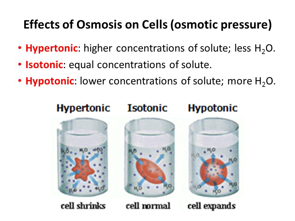 Effects of Osmosis on Cells (osmotic pressure)