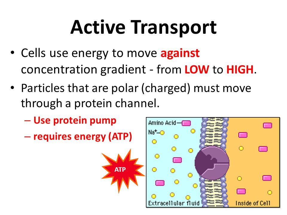 Active Transport Cells use energy to move against concentration gradient - from LOW to HIGH.