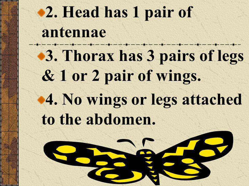 2. Head has 1 pair of antennae