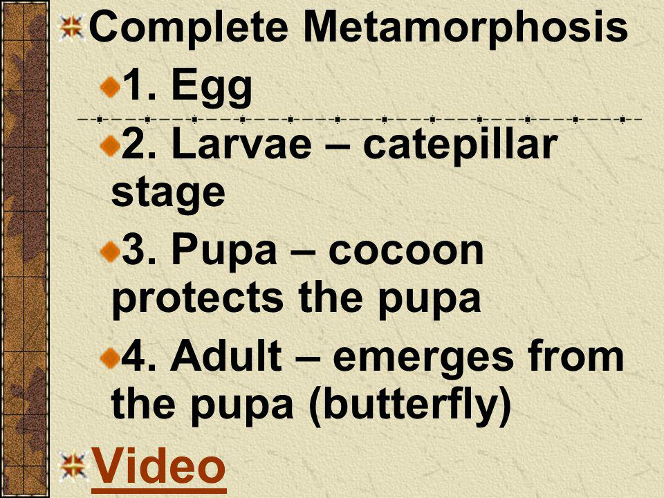 Video Complete Metamorphosis 1. Egg 2. Larvae – catepillar stage