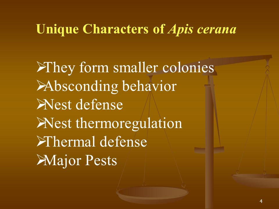 Unique Characters of Apis cerana