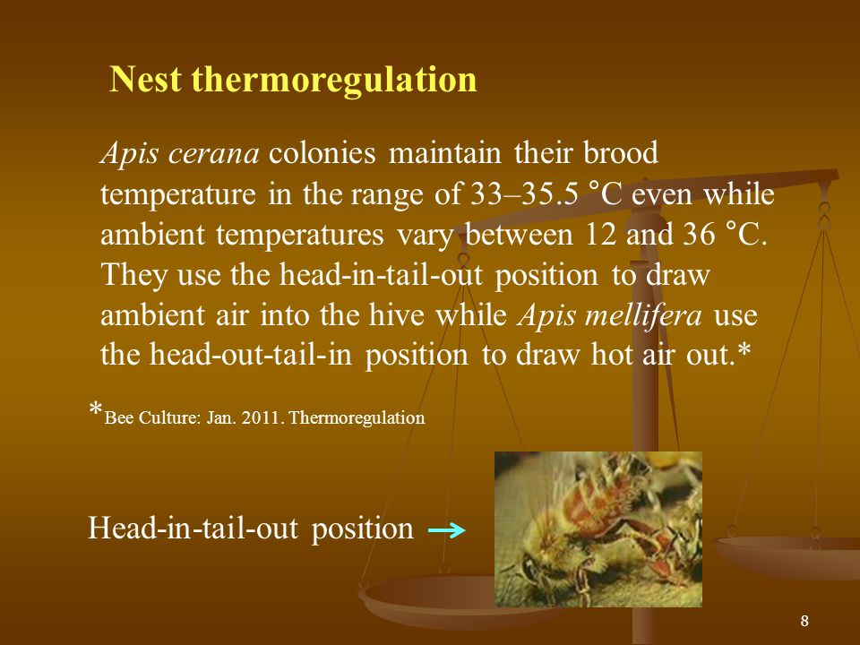 Nest thermoregulation