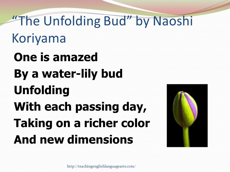 The Unfolding Bud by Naoshi Koriyama