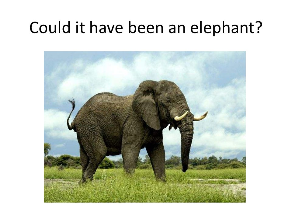 Could it have been an elephant