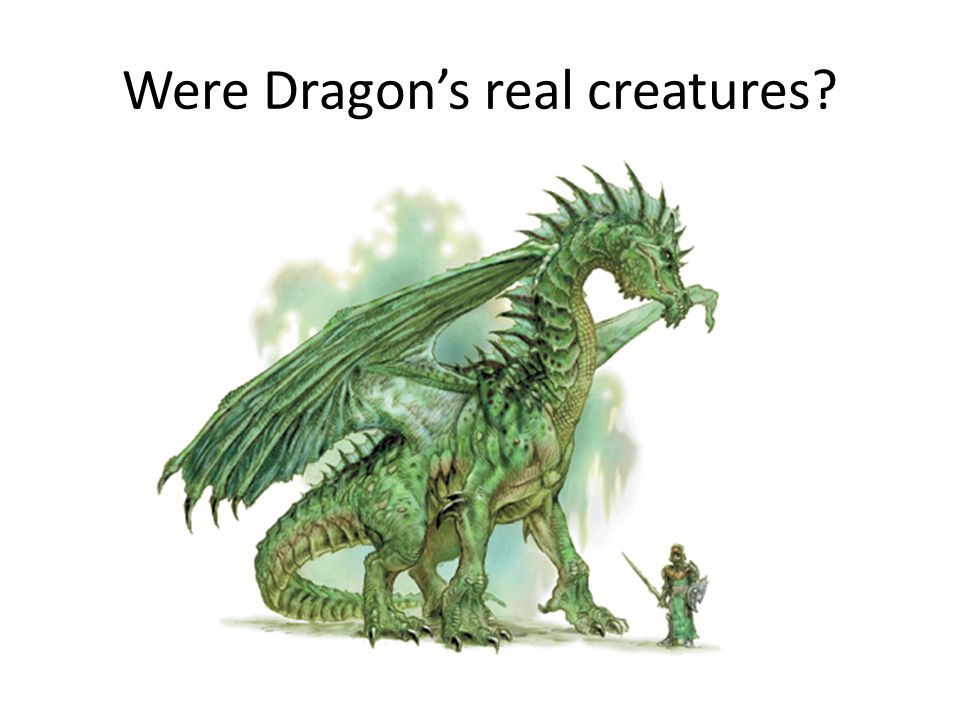 Were Dragon's real creatures