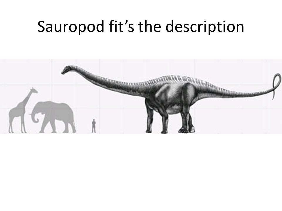 Sauropod fit's the description