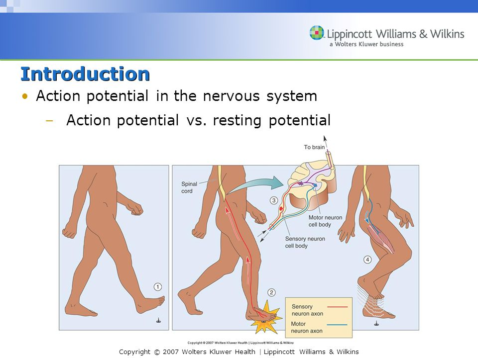 Introduction Action potential in the nervous system