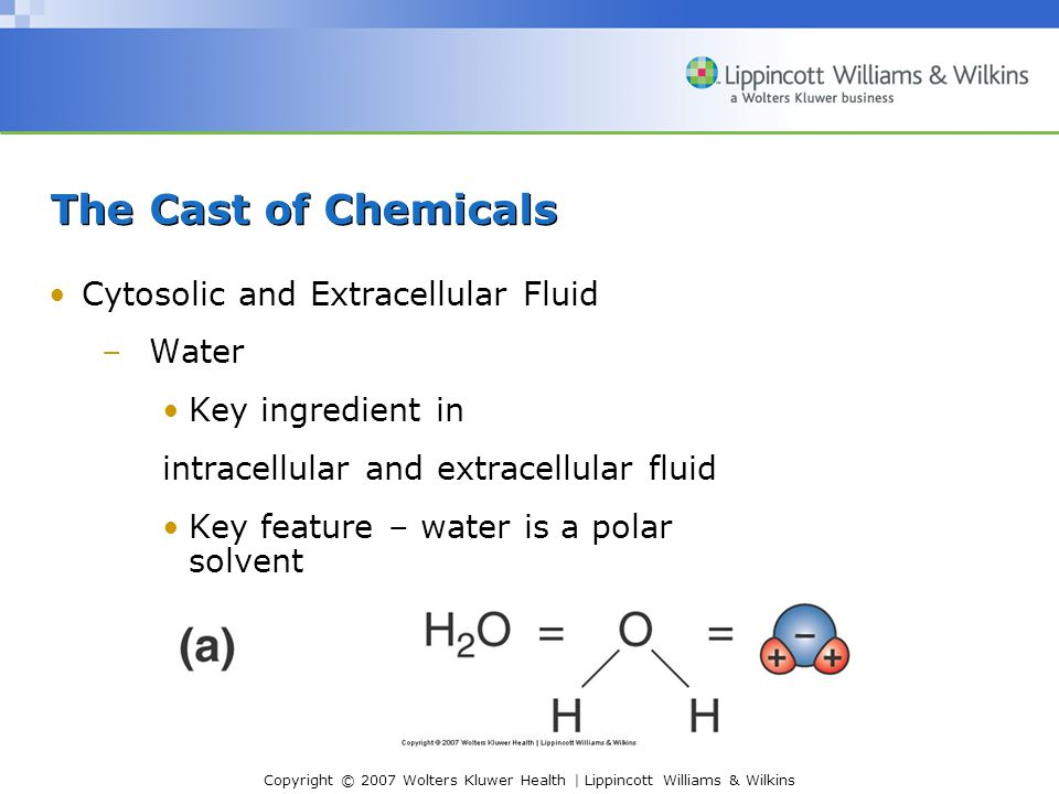 The Cast of Chemicals Cytosolic and Extracellular Fluid Water