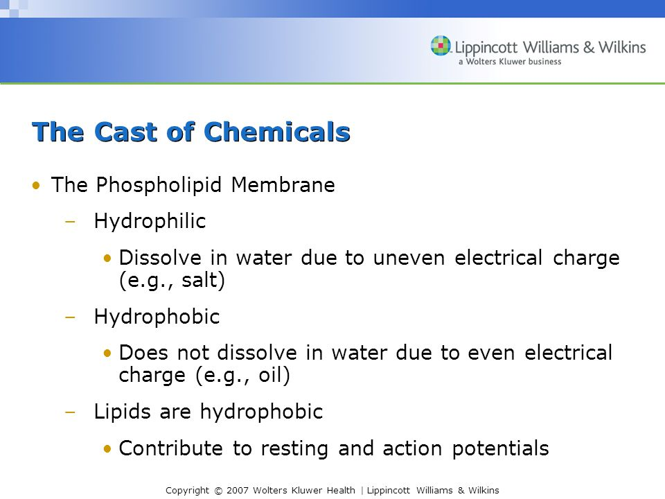 The Cast of Chemicals The Phospholipid Membrane Hydrophilic