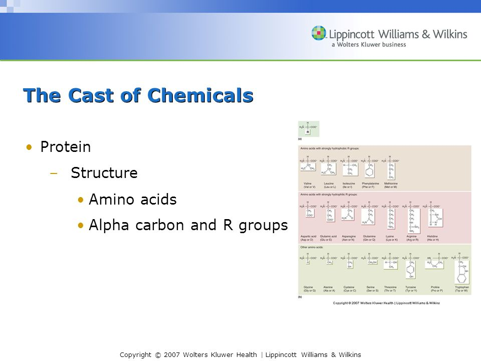 The Cast of Chemicals Protein Structure Amino acids