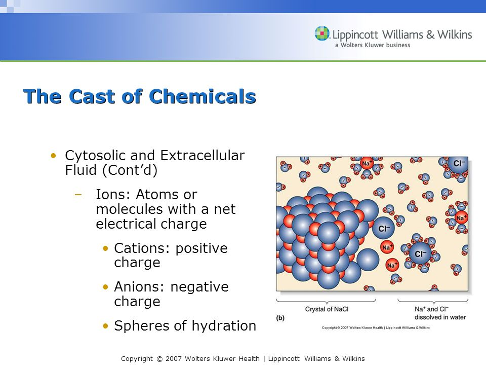 The Cast of Chemicals Cytosolic and Extracellular Fluid (Cont'd)