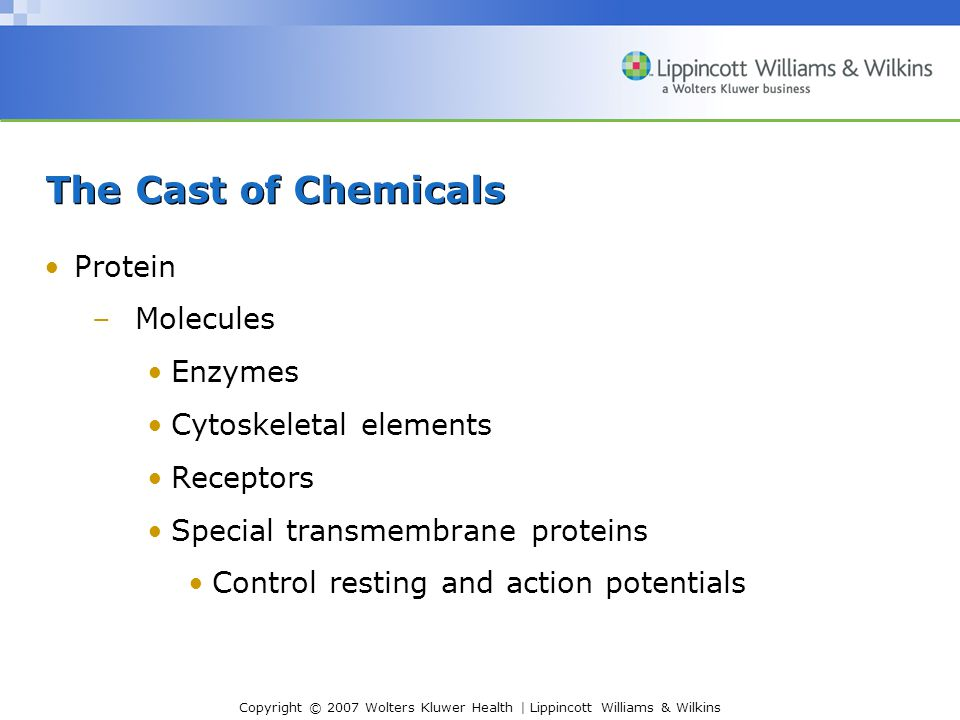 The Cast of Chemicals Protein Molecules Enzymes Cytoskeletal elements