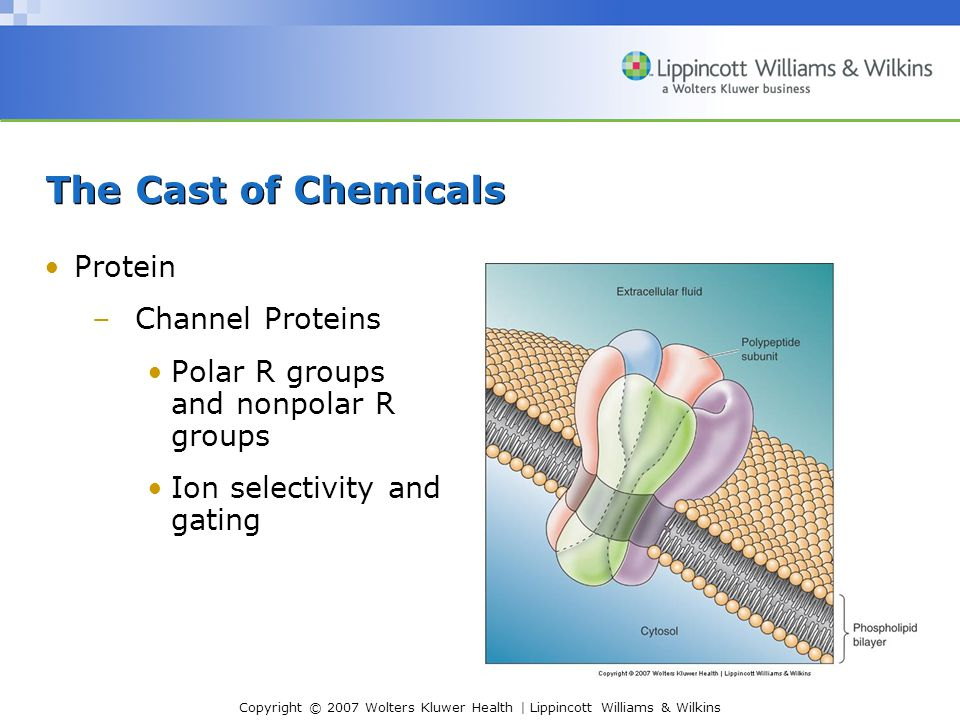 The Cast of Chemicals Protein Channel Proteins