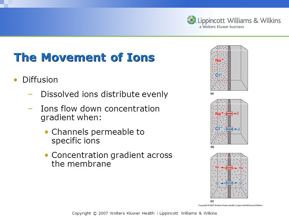 The Movement of Ions Diffusion Dissolved ions distribute evenly